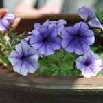 手作りの味 マルサラ - 入口脇の花