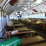 かき小屋えびす丸 - ビニールハウスの店内
