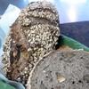 ザ スタンダード ベーカリー - 料理写真:当店自慢のライ麦パンの生地にカシュナッツ・胡桃を練り込みオートミールをたっぷりまぶしました。1本460円ハーフ230円。