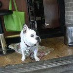 アニバーサリー2001 - 1Fの番犬?