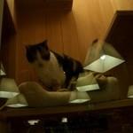 16440230 - 貴志駅のスーパー駅長は三毛猫・たまちゃんです。昔は触れたそうですが、人が多くなりガラスケージの中に、、、高根の花ならぬ高根の猫ちゃんになりました。ガラス越しなのでこちら側の照明が映りこんじゃいました!
