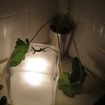 マディグーカフェ - トイレ内カウンターの間接照明とオブジェとセローム
