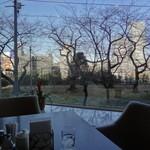 スリーゼ - 店内から桜並木と外堀通り沿いのビルを望む