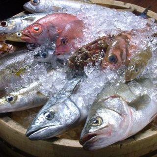 毎日全国の漁港から新鮮な子たちが入魚中!