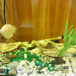 16636161 - 水槽のお魚さん