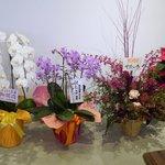カレーの店 ボンベイ - まだ開店したばかりだったので花がいっぱいです