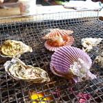 なぎさ丸 - カキとひおうぎ貝