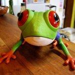 キッチン ククゥ - このカエルは何かな?