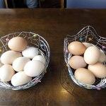 我が家の卵 - 左が地卵,右が比内地鶏卵