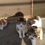 薄木荘 - 癒しの猫たち