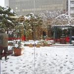 16836898 - Rose Garden では雪かき