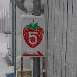 和田観光苺組合 - 5番のビニールハウス