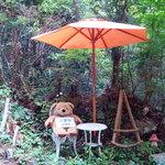 岩湧の森 お茶処 CHELSEA - くまちゃんが座っていれば営業中!