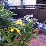 17113612 - 柚子みたいな柑橘類が