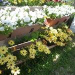 1713041 - 綺麗な花が育てられています