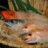 砦 - 料理写真:新鮮な魚介類は美味しさ◎