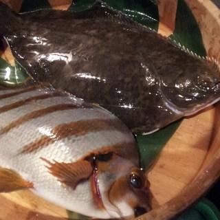 鮮度バツグンの海の幸!水槽で泳ぐ活けの鮮魚をご賞味あれ!