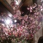 17337163 - 見事な桜