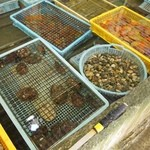 新島水産 - コンクリートの生簀には色んな貝が一杯