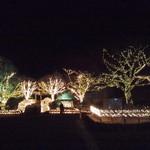 17382360 - ほわいとファームの近く(公園)です。今年のお正月に見に行きました。
