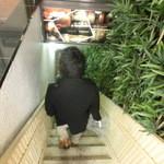 桂 - 階段を下っちゃいます
