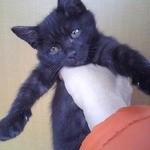 ビストロ ル シャノワール - 拾い猫