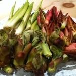 高瀬 - 秋田県三種群山本町より、天然山菜を入荷しております。