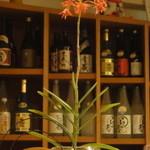 小石川 かとう - 本日のお花、雛セット付