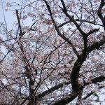 京乃ちりめん山椒 毬りん - 春には窓から綺麗な桜が見えます