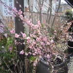 国分寺そば - 桜。