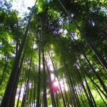 休耕庵 竹の庭の茶席 - 約2000本あるという孟宗竹の庭