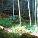休耕庵 竹の庭の茶席 - 休耕庵からの眺め