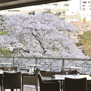 スラッシュカフェ - 春にはテラス席からは目の前に桜が広がる