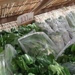 シュウ - 野菜販売