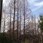 17962565 - 木々の春はまだまだ・・・