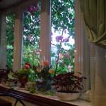 AMI - テーブル席から見た外のバラ♪