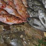 地場鮮魚 小枡園 - 【地魚各種】カサゴ・カレイ・メバル(カサゴは秋口〜冬場初旬)カレイ、メバルは春と秋口に入荷しております。