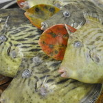 地場鮮魚 小枡園 - 【地魚各種】カワハギのシーズンは秋口後半〜冬場にかけて煮魚でご提供しております。波風の強い時化と呼ばれる時に良く水揚げされます。