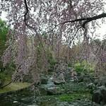18014986 - ピンク色で満開です♡*