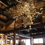 18049547 - 店の中に満開の桜