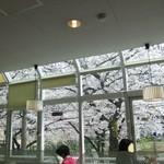 マクドナルド - 二階からの桜