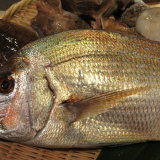 全国のプロも信頼する名漁師が獲って〆た鮮魚を仕入れています!
