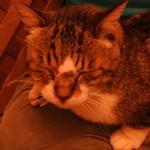 シリンゴル - 膝の上の「猫ちゃん」