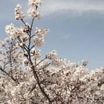 18098705 - 桜満開でした~♪