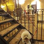 カフェ ラ・ボエム - お気に入りの階段