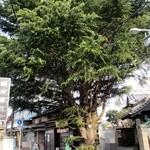 みかどパン店 - すばらしいヒマラヤ杉