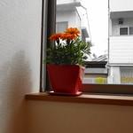 水谷珈琲 - ところどころにお花が♪