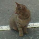 18217820 - 看板猫のお出迎え