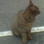 18217822 - 看板猫のお出迎え