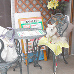 アジアン・エスニックレストラン&バー コセリ - 入口前のテラス席